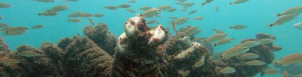 COMUNICADO DE PRENSA Alianza Interinstitucional proyecta la construcción de megaestructura de arrecife artificial en la costa del Pacífico