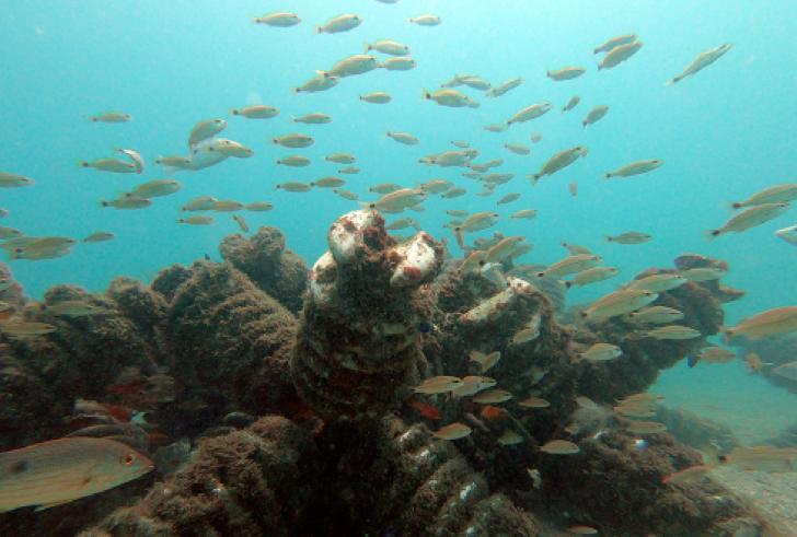 , COMUNICADO DE PRENSA Alianza Interinstitucional proyecta la construcción de megaestructura de arrecife artificial en la costa del Pacífico